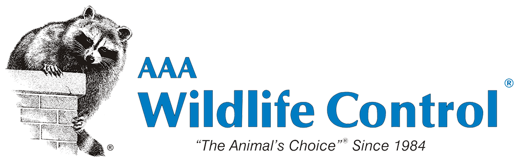 AAA Wildlife Control - The Animals Choice